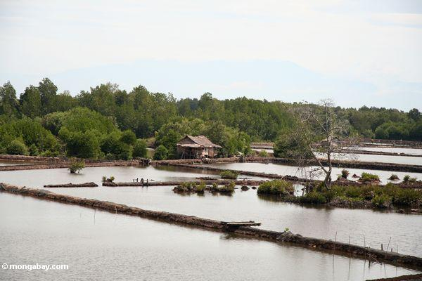 Cleared mangrove forests http://travel.mongabay.com
